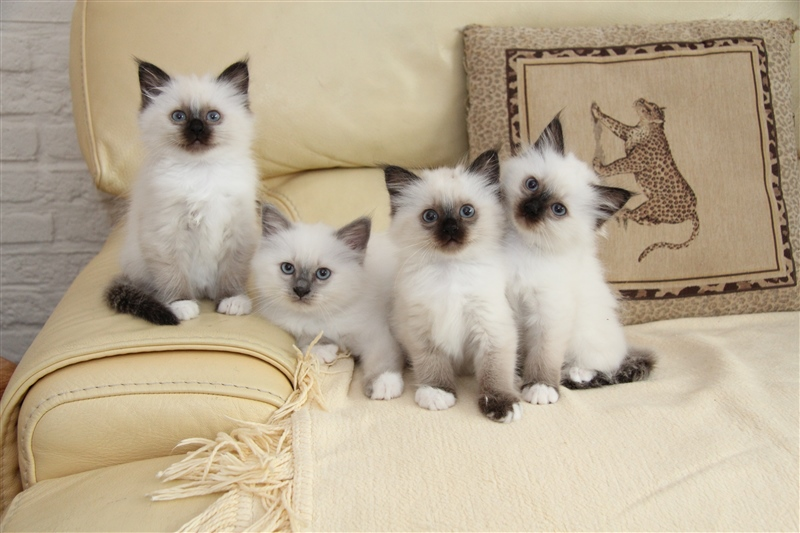 vaccinatie kitten kosten